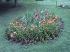 doublestump-garden
