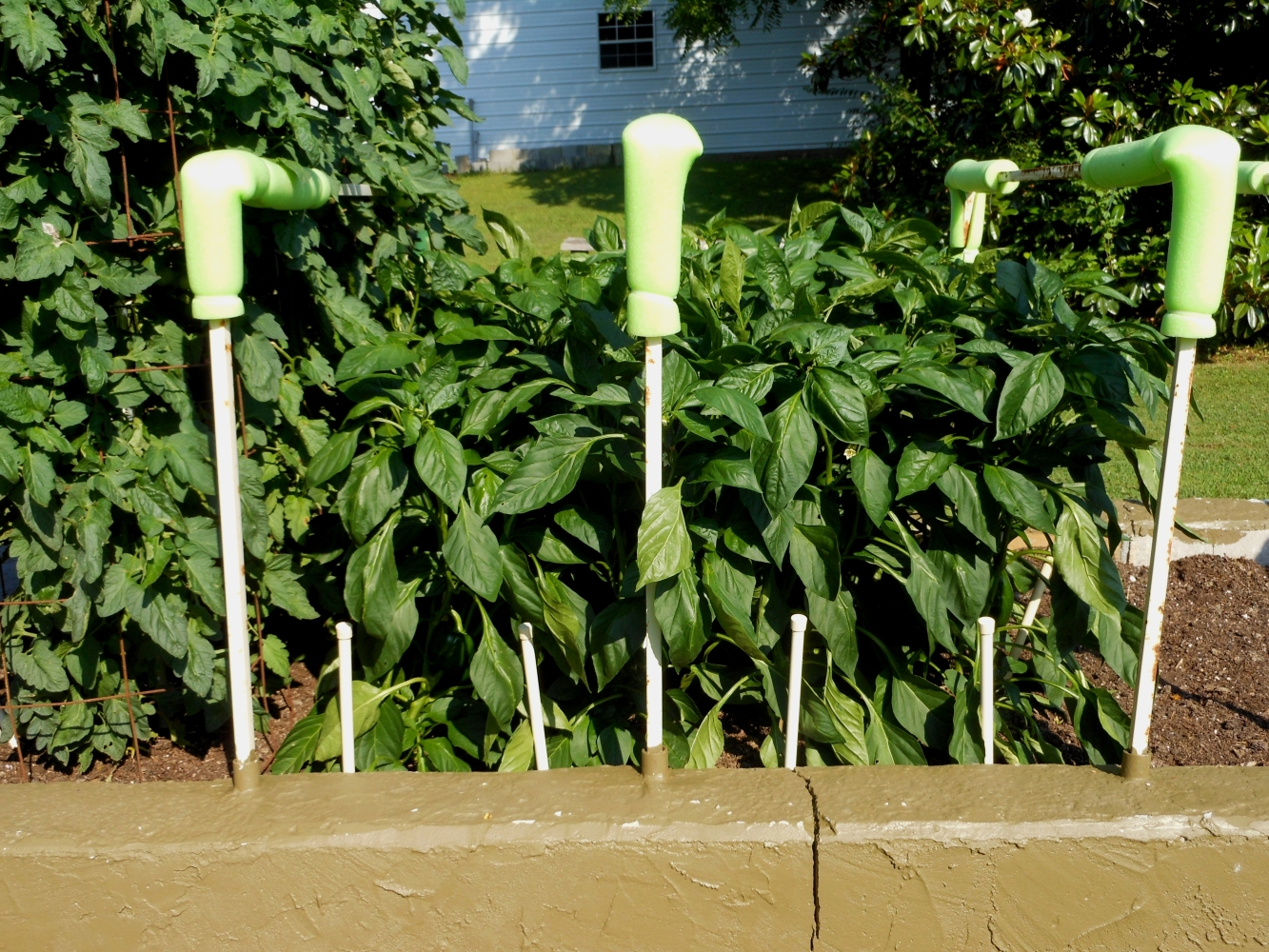 06-15-14_Bell_Pepper_Plants_01