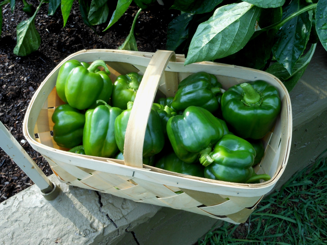 06-27-14_Bell_Pepper_Basket_01