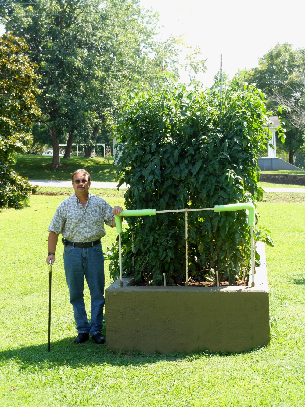 07-11-14_Me_And_BetterBoy_Tomato_Plants03