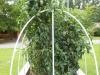 08-01-2014_Tomato_Plants_New_Garden_02