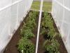 Gardens28