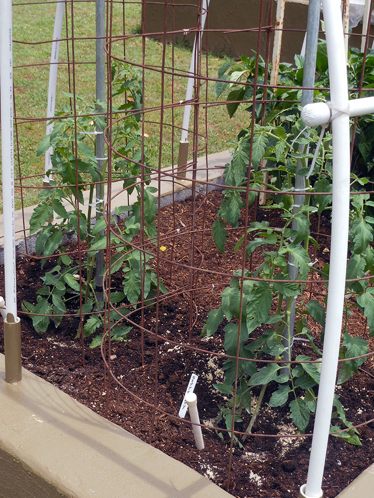 05-26-2015 Garden No 2 New Better Boy Tomato Plants