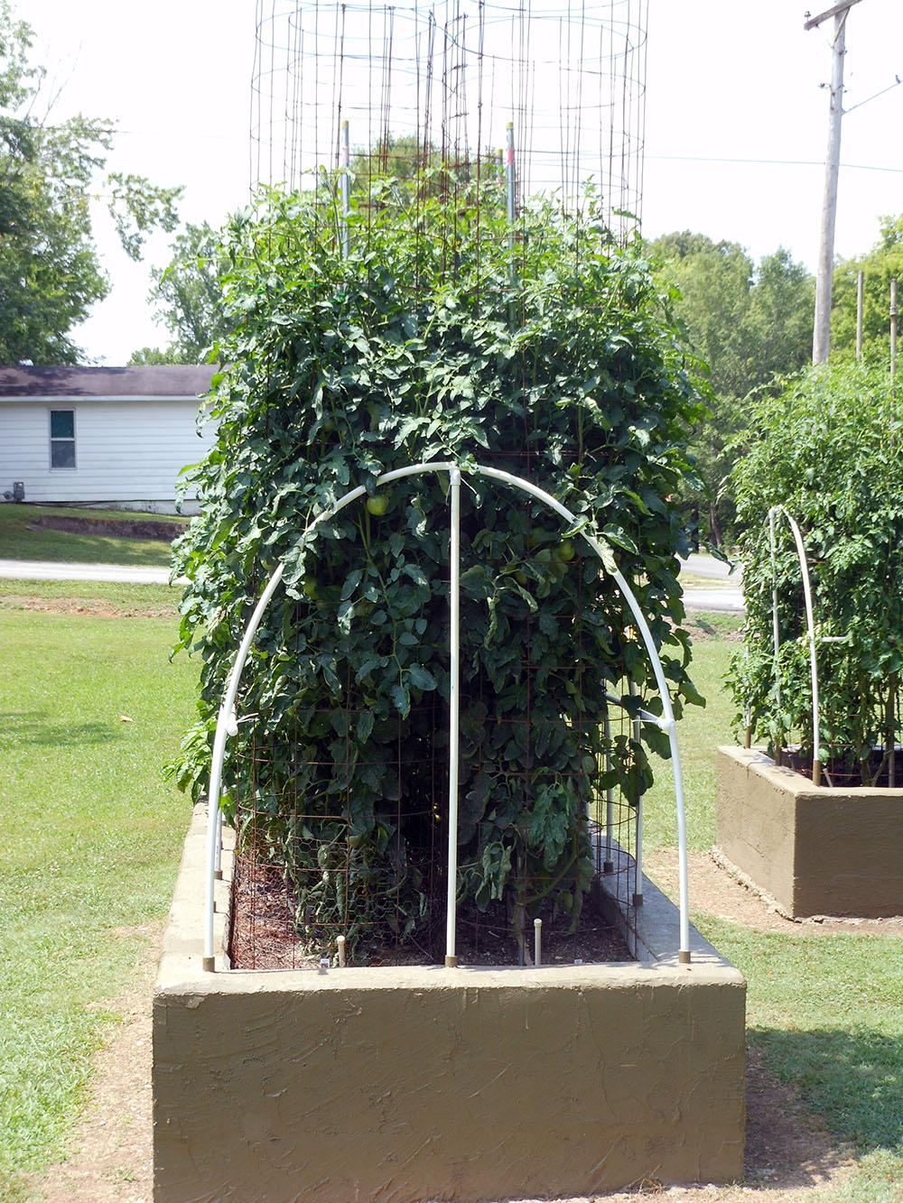 06-24-2015 Garden 01 Better Boy Tomato Plants 01