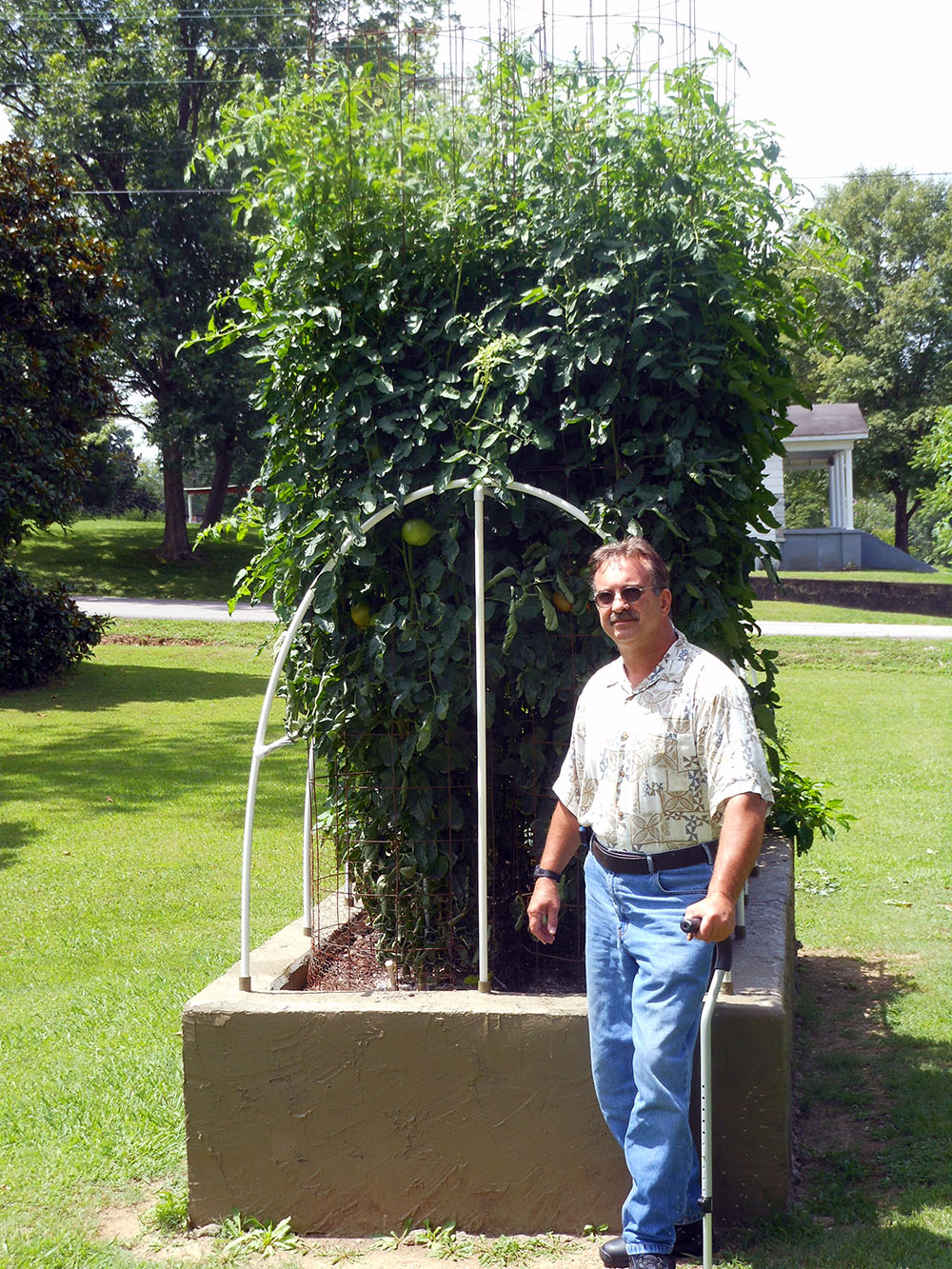 07-10-2015 Me and Better Boy Tomato Plants 01
