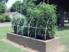 06-24-2015 Garden 02 Better Boy Tomato Plants 02