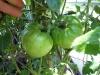06-24-2015 Garden 02 Better Boy Tomato Plants 03