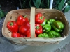 06-26-2015 Bell Peppers 01