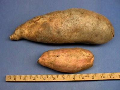 2sweetpotatoes-19